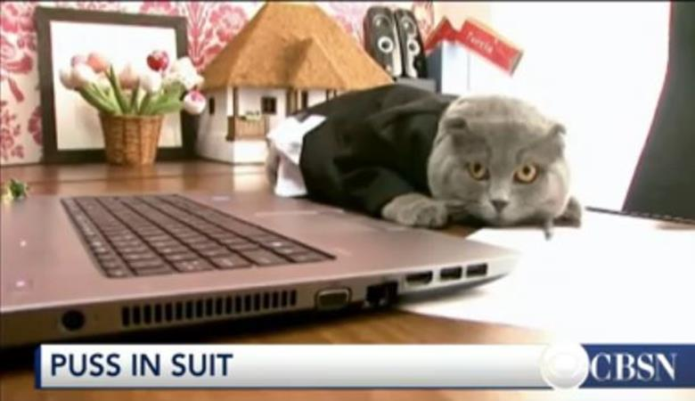 Cat becomes new manager of Romanian communications company (Image 1)_2469