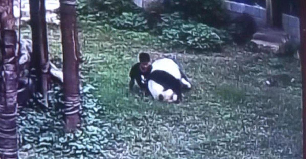 panda_china_zoo_152944