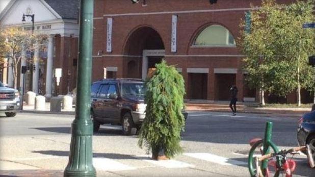 tree_man_151403