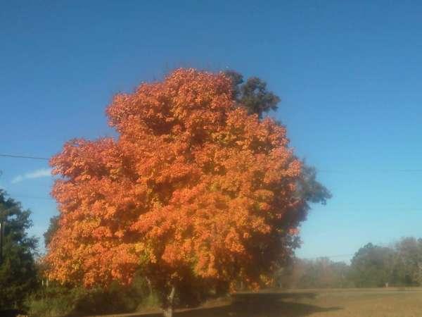 davkerr-fall-tree-600_159007