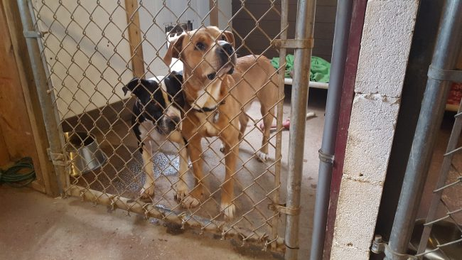 shelter-dogs_175594