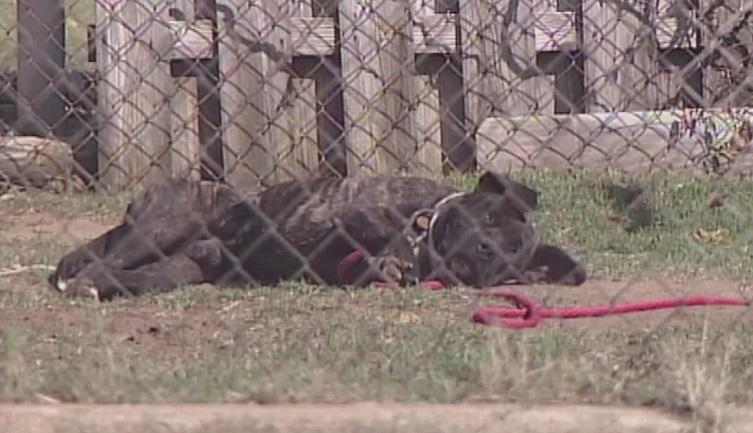 Columbus City Council passed a new ordinance tightening restrictions on tethering dogs.