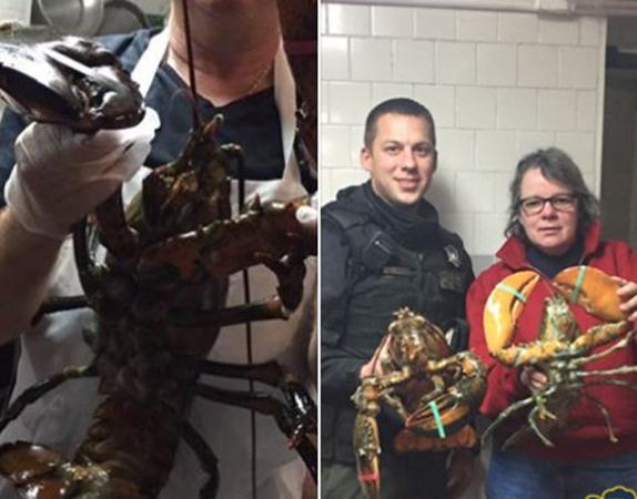 lobsters_veterans (Copy)_205363