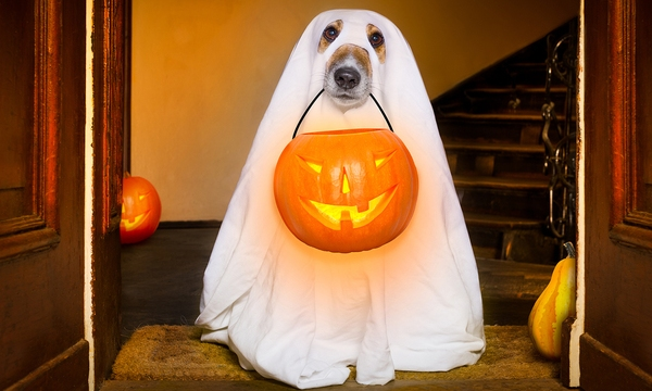 Halloween Ghost Dog Trick Or Treat_297577