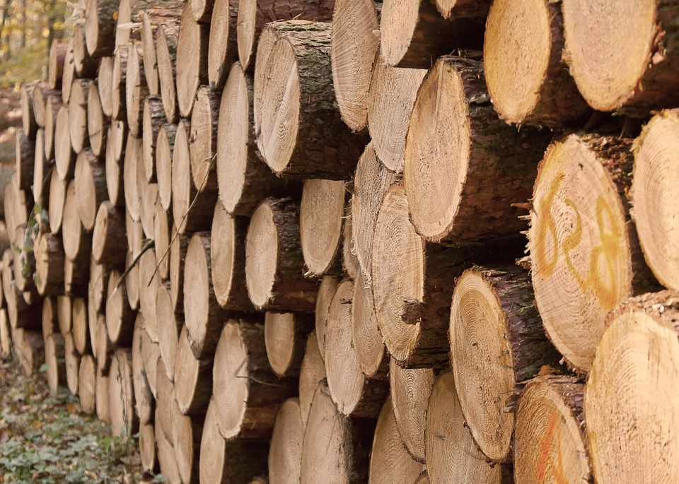 lumber plant_1519219160058.jpg.jpg