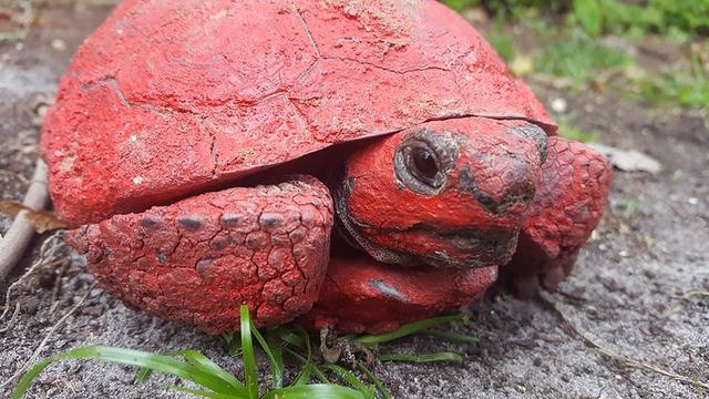 tortoise_1524512252973.png