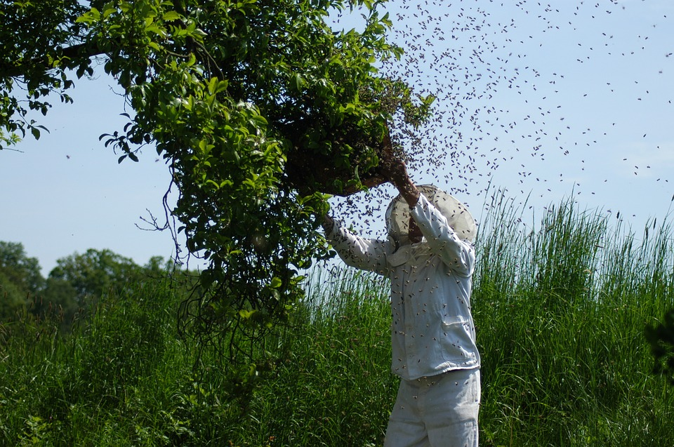 beekeeper_1526386883583.jpg