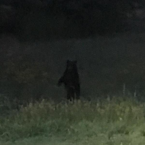 bear6_1529617477119-842137438.jpg