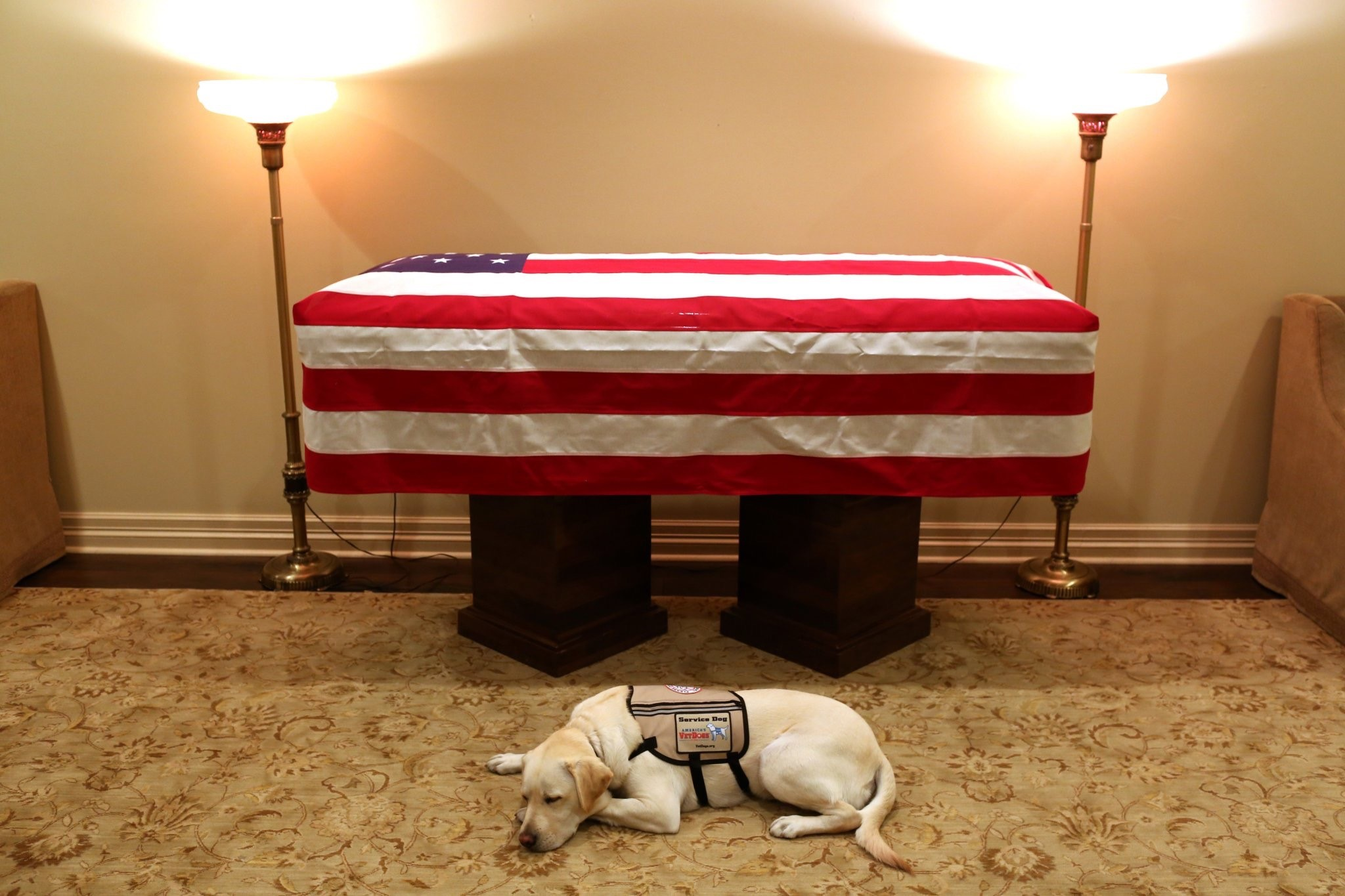 Bush Coffin_1543809547778.jpg.jpg
