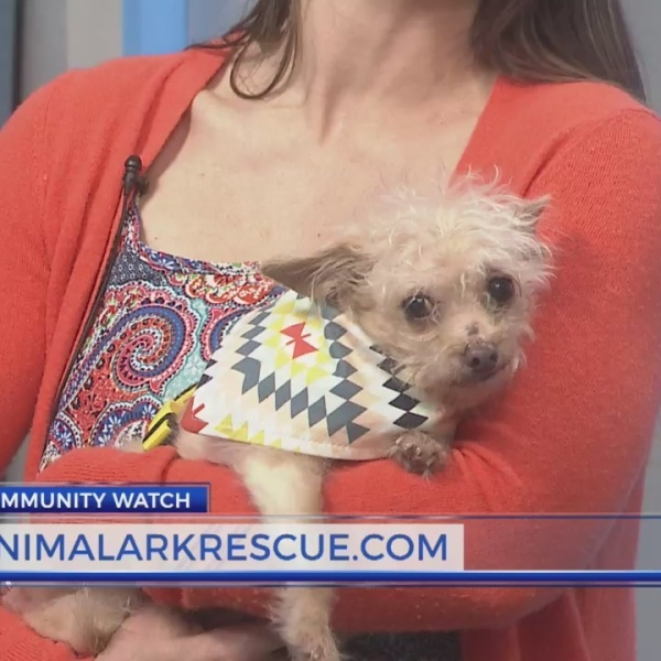 Animal Ark Pet of the Week: Stewie