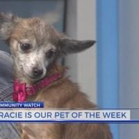 Meet Gracie: The Pet of the Week