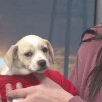 Pet of the Week: Gus from PAWS Humane