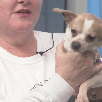 Humane Society of Harris County: Pet of the Week