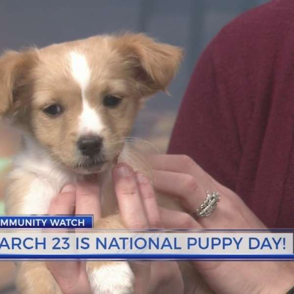 PAWS Humane offers weekend adoption special in honor of National Puppy Day