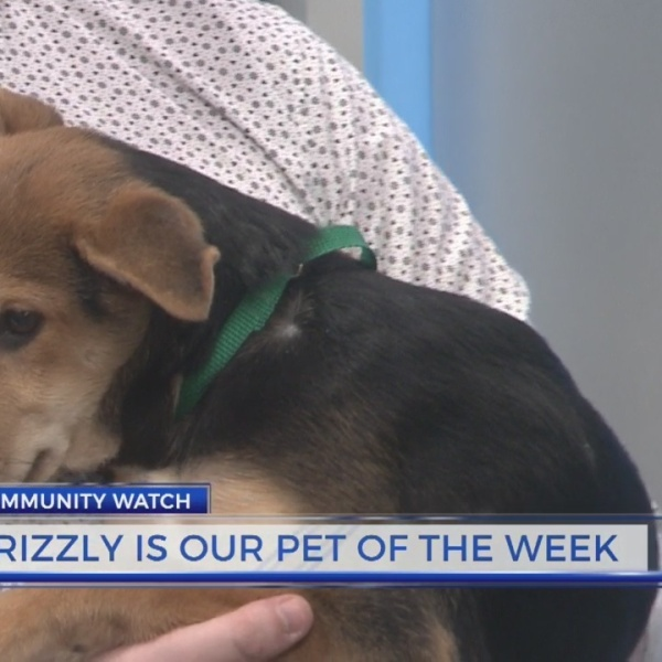 Meet Grizzly: City of LaGrange Pet of the Week