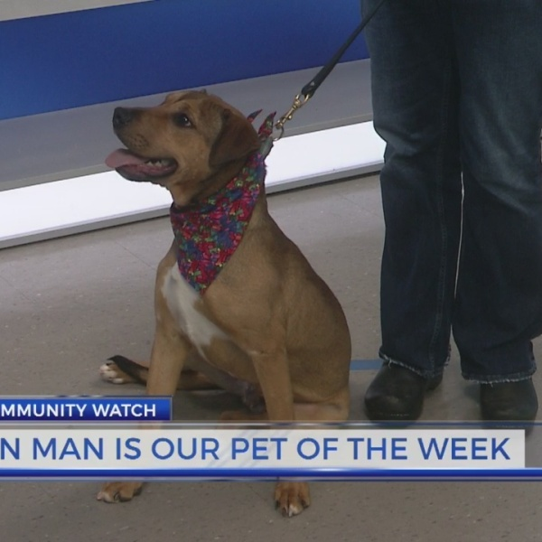 Meet Tin Man: Pet of the Week from Humane Society of Harris County