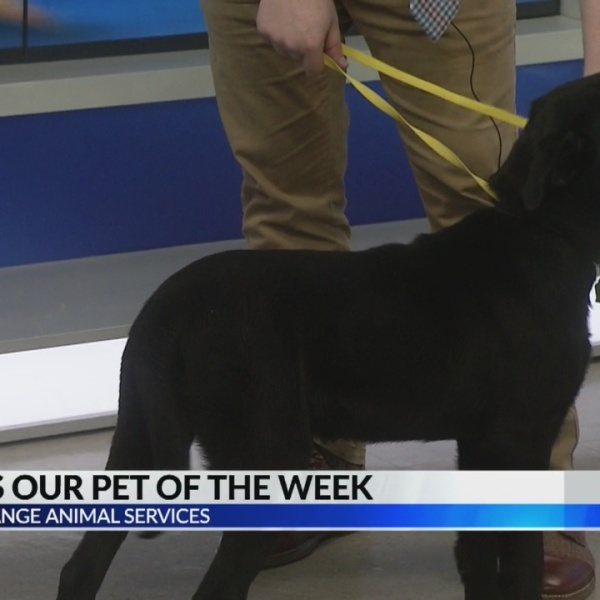 Raven: Pet of the Week from LaGrange Animal Services