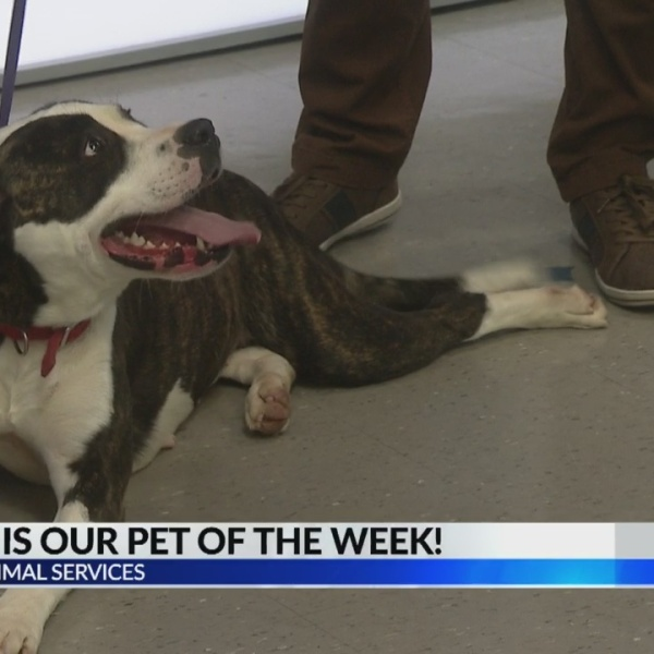 Pet of the Week: Athena from LaGrange Animal Services