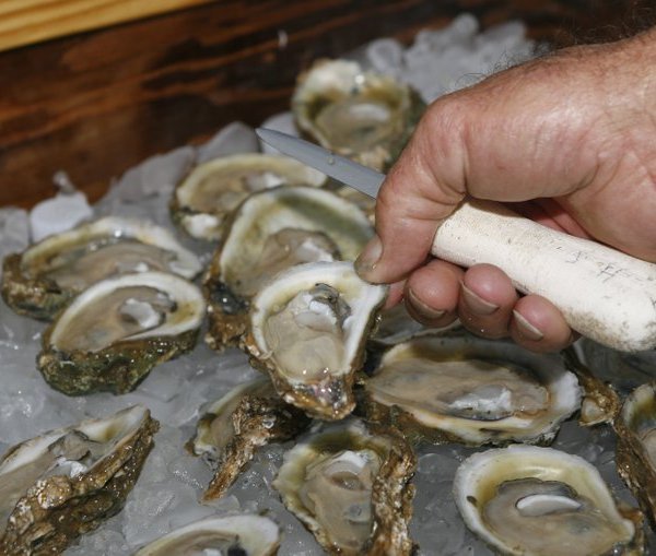 oysters from Apalachicola